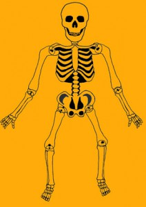 Skelett-Muster